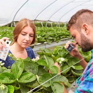 Bildunterschrift: Mit Nützlingen zu gesunden Erdbeeren: Bei der Gesunderhaltung durch integrierten Pflanzenschutz setzt der deutsche Obstbau zu allererst auf biologische Schädlingsbekämpfung. (Bildnachweis: GMH)